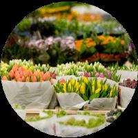 choisir des fleurs